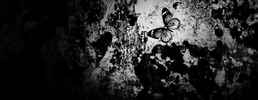 farfalle notturne